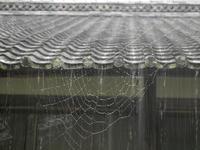 蜘蛛の巣 2015/07/16