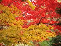 もみじ 2010/11/15