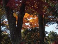 もみじ 2010/11/16