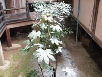 雪 2011/01/15